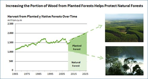 Increasing the portion of wood from planted forests helps protect natural forests